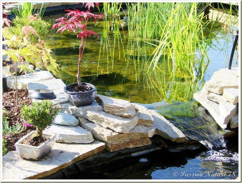 Le bassin...Mon petit coin de paradis (28)