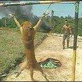 Au pérou, des soldats s'entrainent à tuer sur des chiens vivants