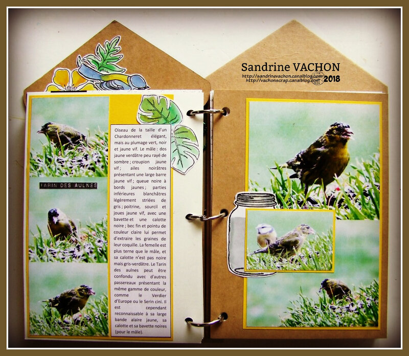 Mini album LES OISEAUX DE MON JARDIN Sandrine VACHON (11)