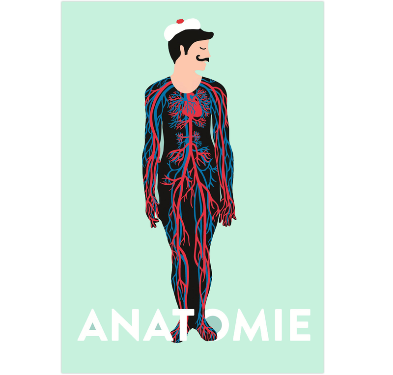 Anatomie-COUV