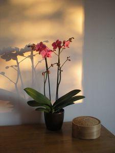 L'orchidée - Octobre 2011 (5)
