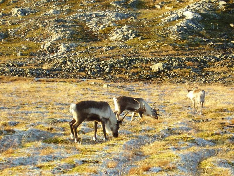 17-10-08 Sortie Montagne et rennes (114)
