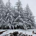 2009 12 17 La neige et la nature (12)