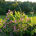 Windows-Live-Writer/Jardin_10232/DSCN0743