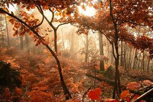 nature_embrum_e