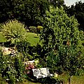 Windows-Live-Writer/jardin_D005/DSCF3979