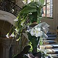 Exposition florale versailles à la française