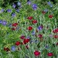 Quelques floraison au jardin en ce début de juin.