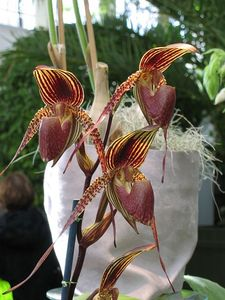 blog_orchid7