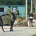 Jeux équestres manchots 2013 (188)