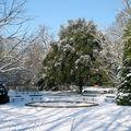 Le jardin botanique de tours engourdi sous la neige