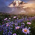 montagne fleuro1_500