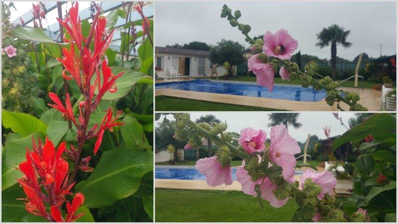 fleurs Oleron
