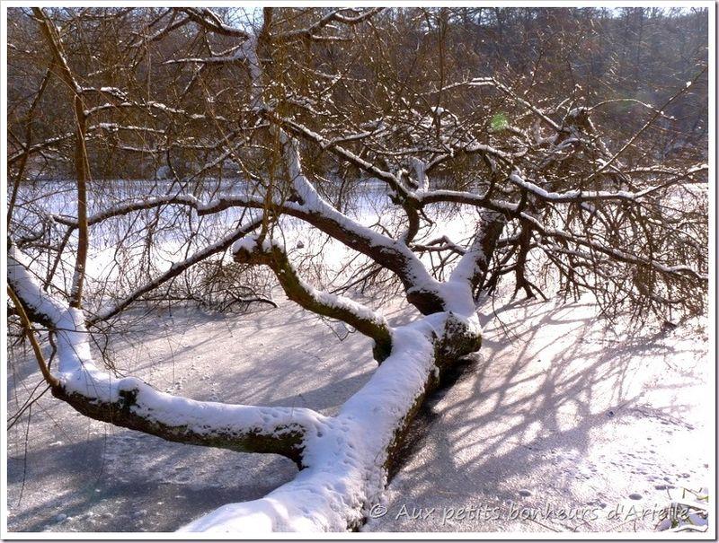 Ma forêt sous la neige (5)