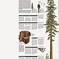 Muir Woods (2).jpg