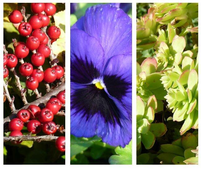 tryptique-plantes