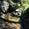 Ruisseau à Euproctes et Salamandres
