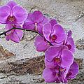 Orchidée, clathre et mésanges