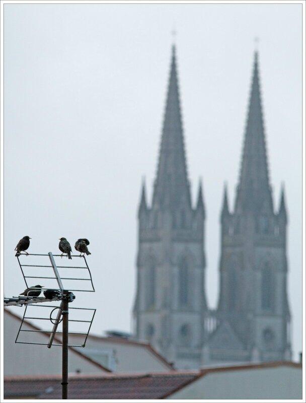 ville etourneaux antenne clochers 170416 5