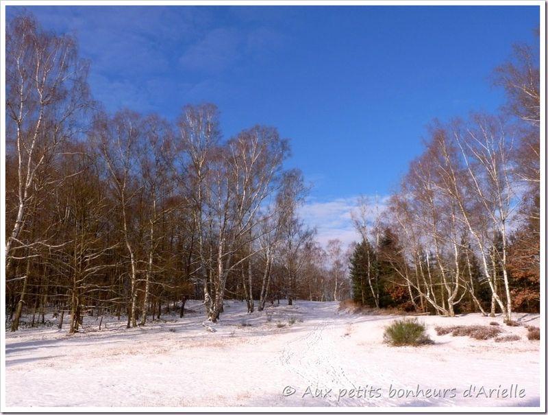 Ma forêt sous la neige (1)