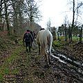 Balade à cheval dans la forêt P1080298