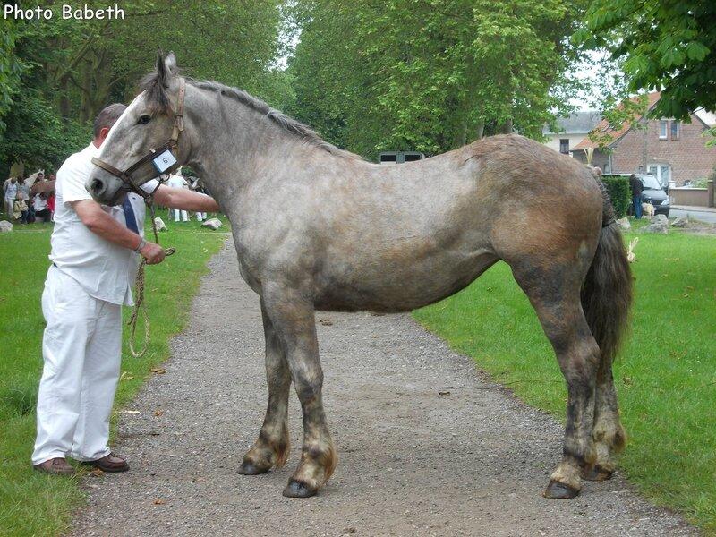 Dora de la Côte - 1er Juin 2014 - Concours d'élevage local - Rue (80)