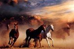 cheval_2