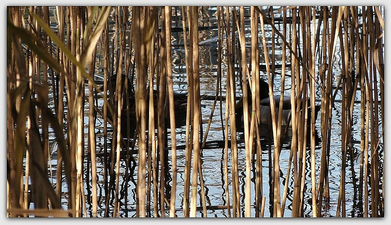 22 11 001 Lac de Nantua (8)1