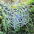 cobweb_1