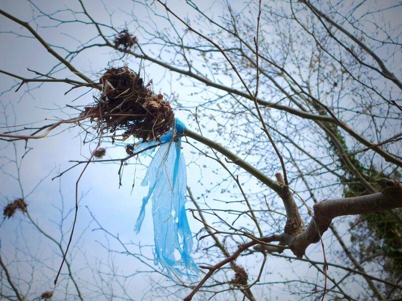 plastique beu suspendu dans arbre