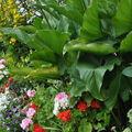 jardins fleuris 0720073