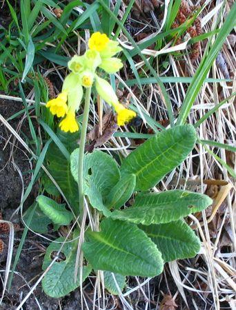 fleur_chartreuse_051__1_
