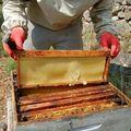 Apiculture : inspection de la ruche