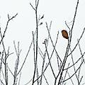 arbre-givre-15-07