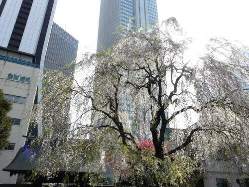Canalblog Tokyo Cerisier 2010 Shinjuku Buildings01
