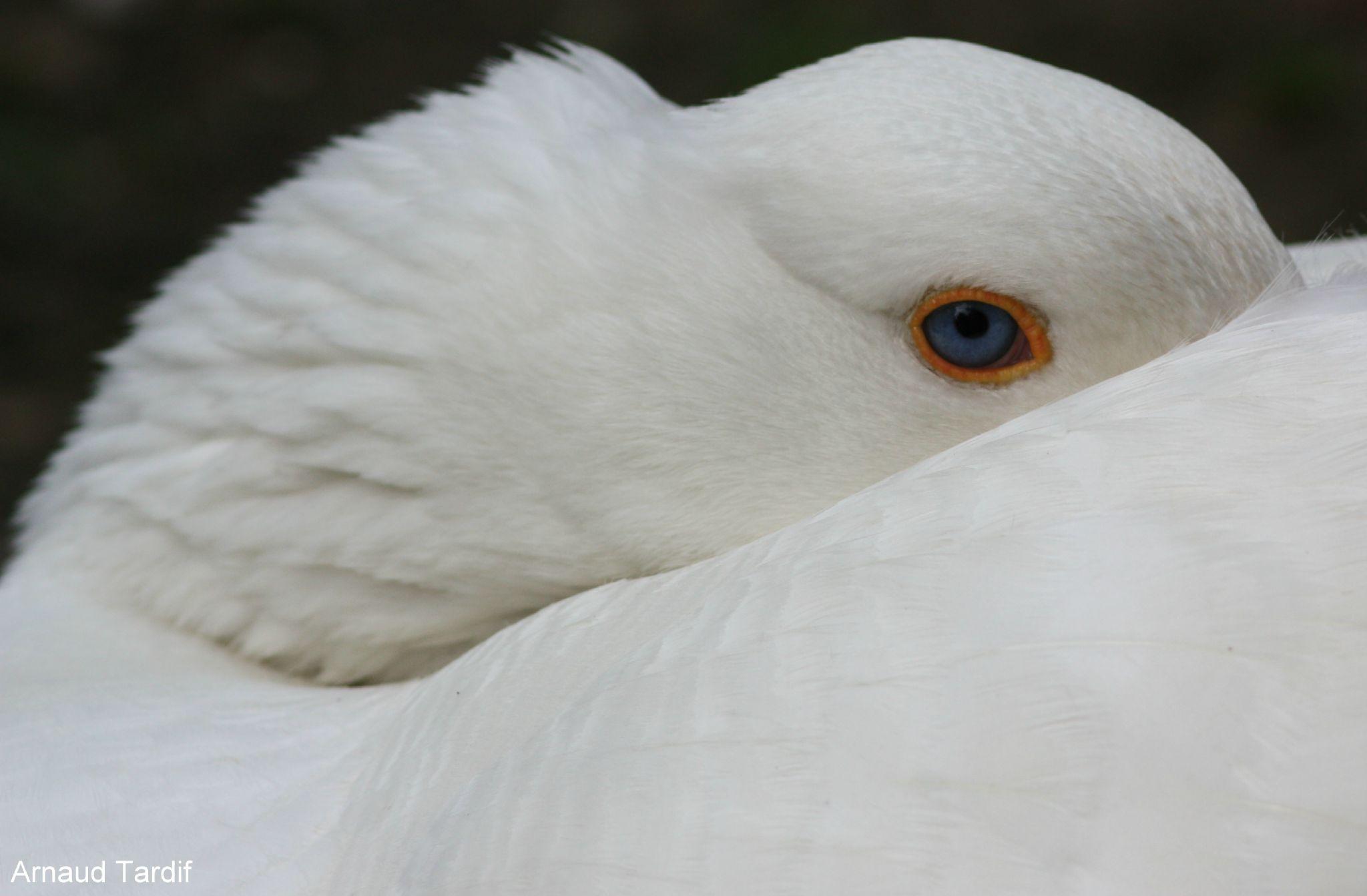 0055 Marais aux Oiseaux