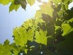 arbre_soleil