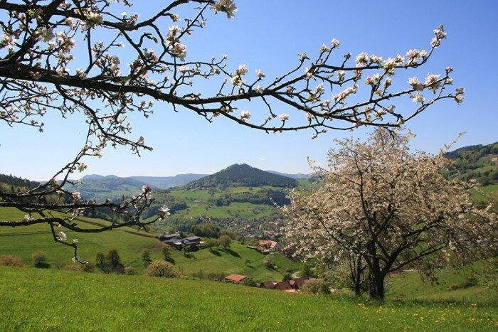 _nature-printemps-alsace-credits-office-de-tourisme-vallee-kaysersberg@700x467