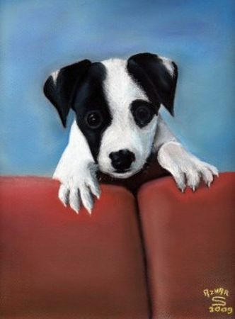 jack_russell_