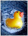 duck_d10