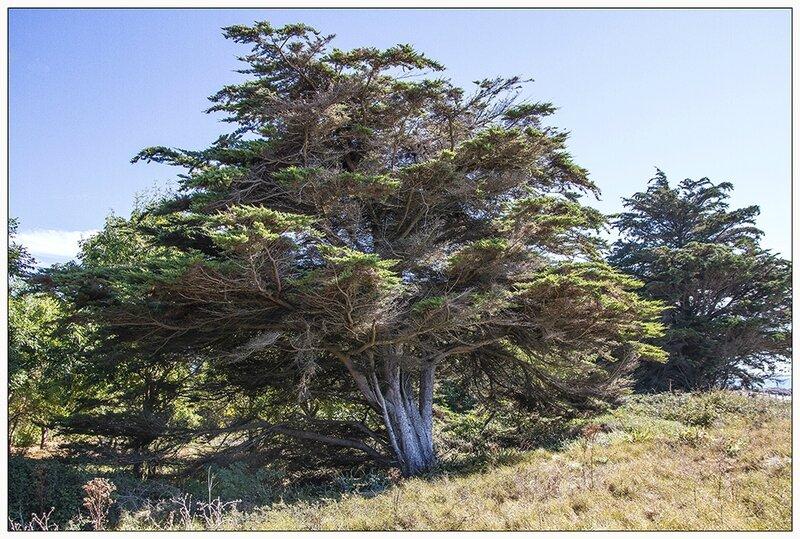 arbre seul_web