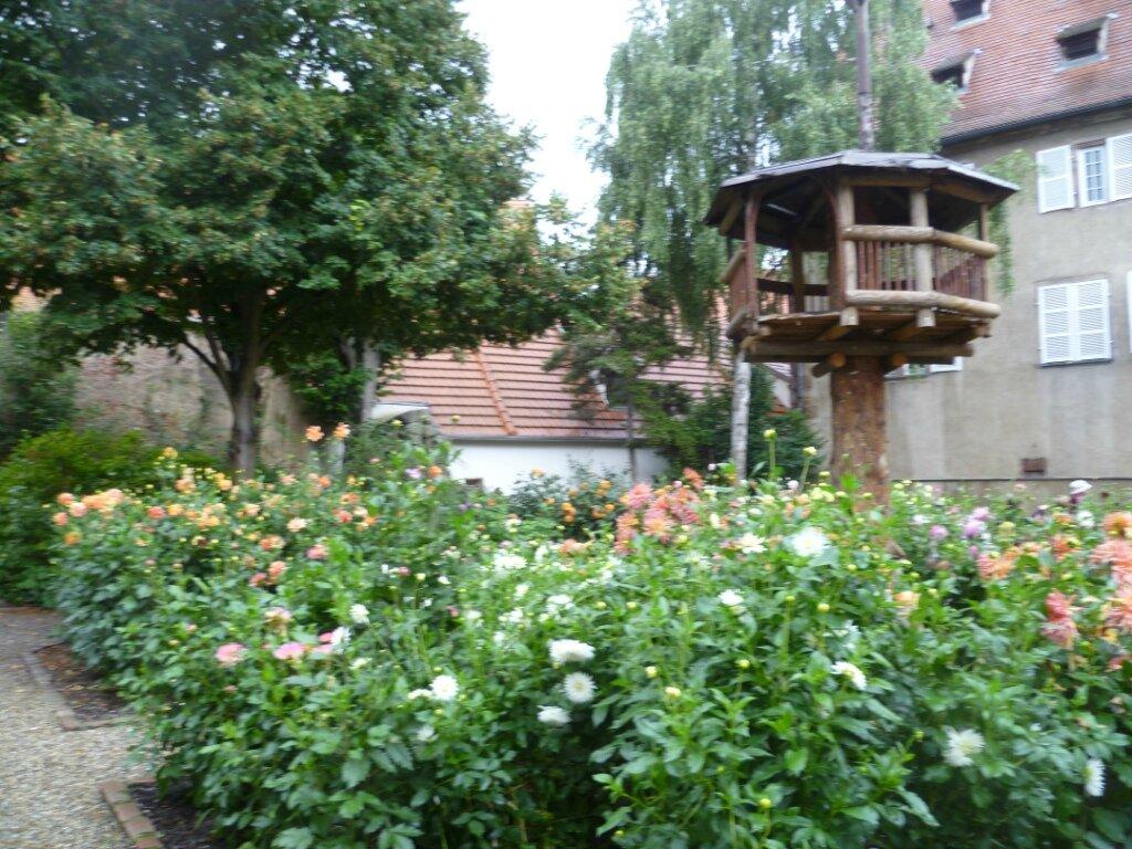 jardin du dahlia