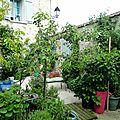 petite cour Boisemont plantes et fleurs