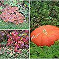 L'automne dans le pays d'auge