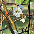 Fin soleil sur fleur blanche
