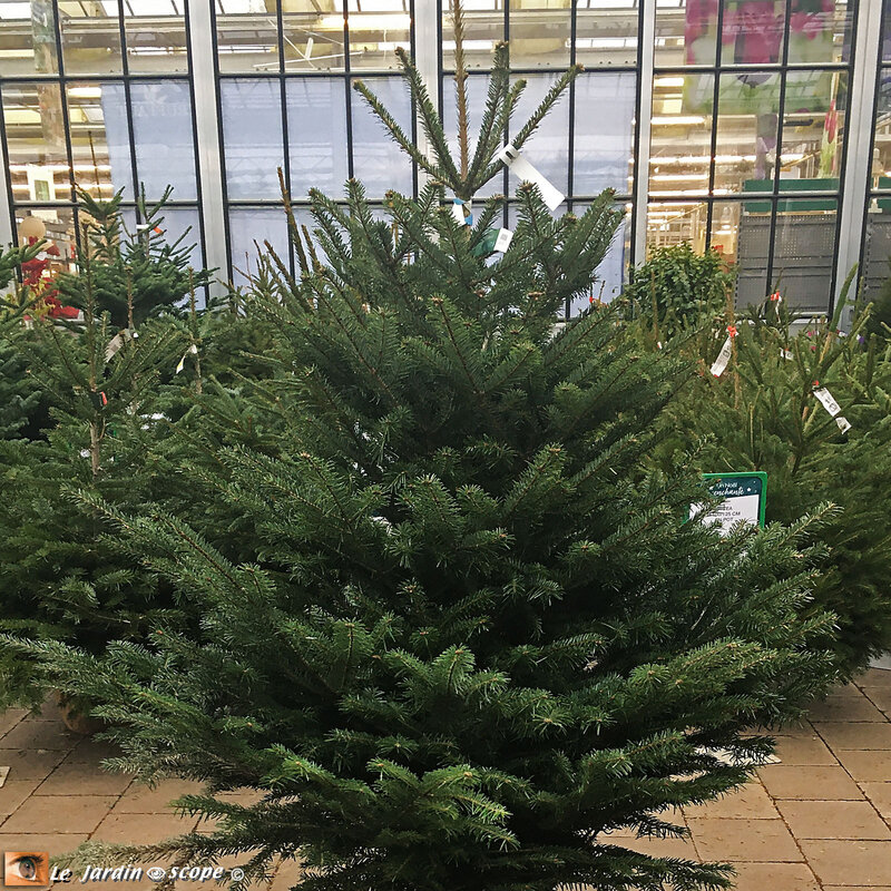 Sapin-Label-Rouge