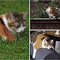 Open-Live-Writer/Au-menu-_10BA6/cats (2)_thumb