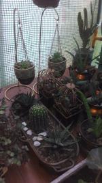 Créa plante 012