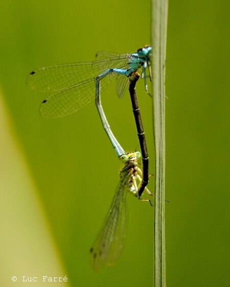 Tourbiere libellules 04