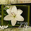 Fleurs blanches-déc_